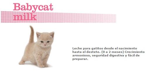 baby milk cat