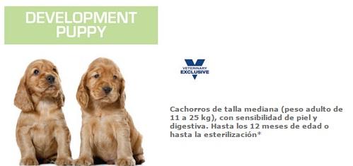development puppy