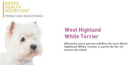 west highland